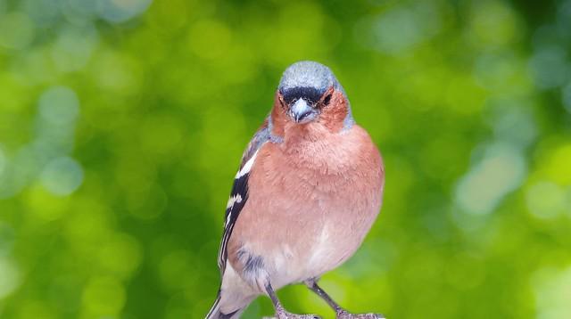 Bird - 5569