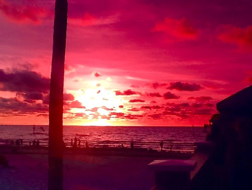 beach view horizon perspective clearwater ocean tree water sunset hues october art artistic fun amazing