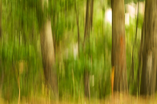 brushstrokes in the woods