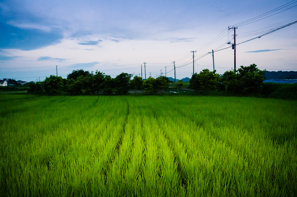 Summer Rice