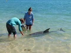 do, 05/07/2012 - 05:48 - 094. Dolfijn krijgt een visje