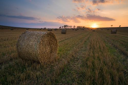 brasov capitefan sunset round apus fields wheat green red yellow haystack clouds