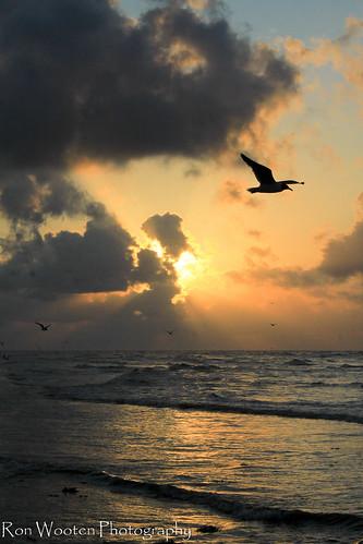 sun galveston bird beach gulfofmexico nature birds sunrise surf waves gulf galvestonisland gulfcoast galvestontexas jamaicabeach beachsunrise greatnature coastalscenery coastallife gulftnc09 gulfconservation jamaicabeachtexas gulfofmexicoconservation