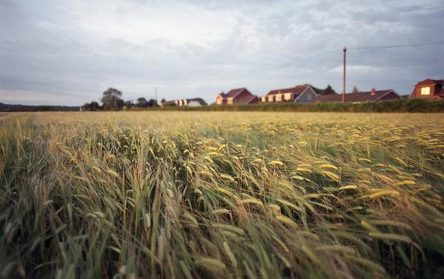 Nikon F801s Wheat Field