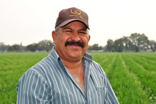 Mexican farmer turned seed producer visits his wheat field | by CIMMYT