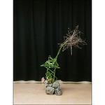 とくさ、ガーベラ、どうだん #ikebana