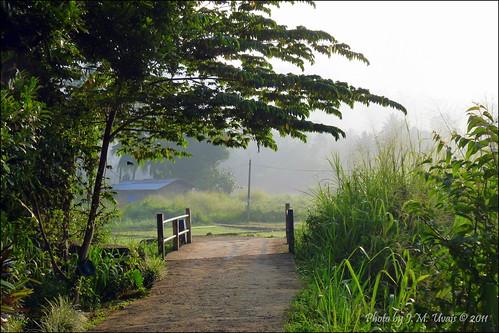 morning bridge light vacation green misty fog sunrise dawn morninglight village srilanka ceylon hillcountry kandy peradeniya gannoruwa