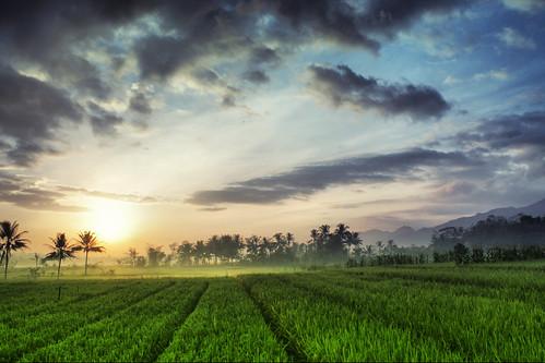 sunrise landscape banjarnegara banyumas canoneos1100d petersimonlewier visitjateng2013 planaricefield sawahdesaplana desaplana