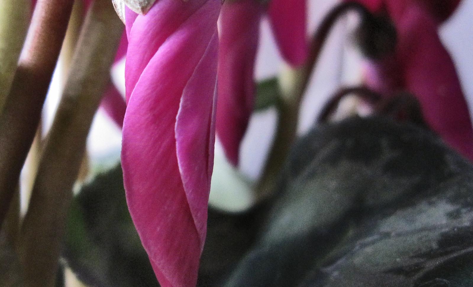 Flor abst