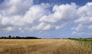 Harvest | by Hindrik S
