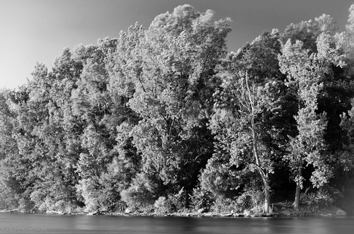longexposure trees sky bw copyright sunlight white lake distortion abstract motion black blur beach nature water monochrome leaves contrast dead daylight rocks glow bright branches gray shoreline nj roots bank windy edge dreamy concept bold richardkownacki