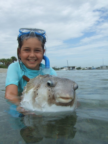 Maddie with a giant porcupinefish! | by AdventureMIke.com
