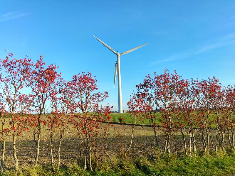 Omkring-Kaedeby-oktober-2015 (27)