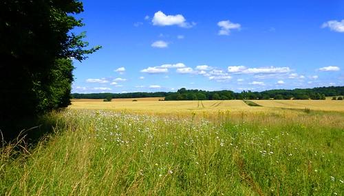 england wiltshire uk westtytherley bentleywood field cereal wheat summer worldtrekker