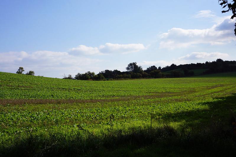 Omkring-Kaedeby-oktober-2015 (19)