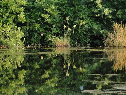 summer favorite reflection green nature water sunrise newjersey outdoor nj marsh campground richtung portrepublic mullicariver collinscove болота ньюджерси palustrinewetlands chestnutlake честнатлейк