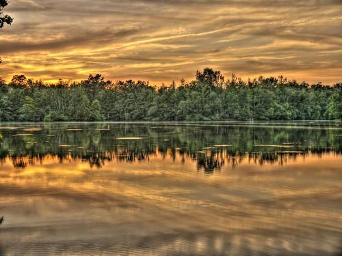 island louisiana honey swamp hdr