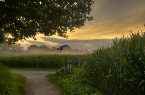 sunset mist green fog clouds landscape photo nevel zonsondergang cornfield groen foto nebel wolken unfound dämmerung grün landschaft schatten twente overijssel landschap schemering fietspad landweg maïs wolkenluchten landscapedreams