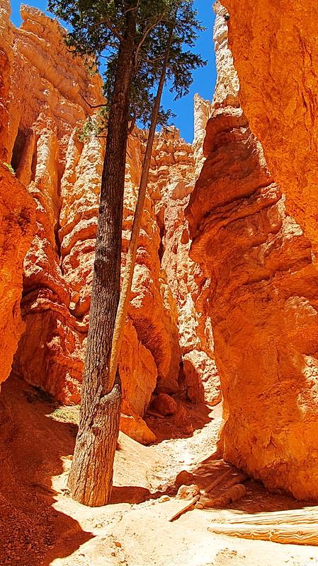 Wall Street Section - Navajo Loop Trail - Bryce Canyon National Park
