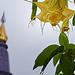 Queen's Stupa, Bee's Spiral