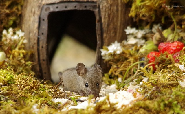 baby mouse in log pile (1)