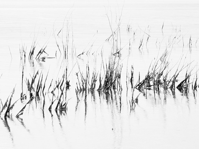 Simplicity in Morning Silence (poem below)