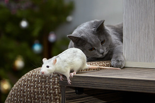 Cat & Mouse | by -Marlon-