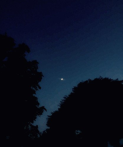 aesthetic trees moon night sky