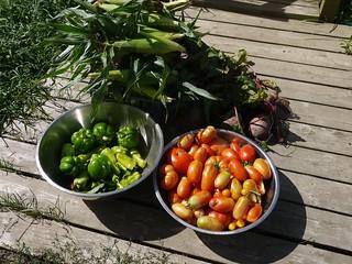 Late August Garden Harvest   by terrabytefarm