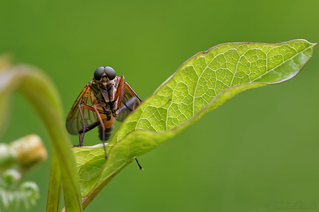 The fly - La mouche