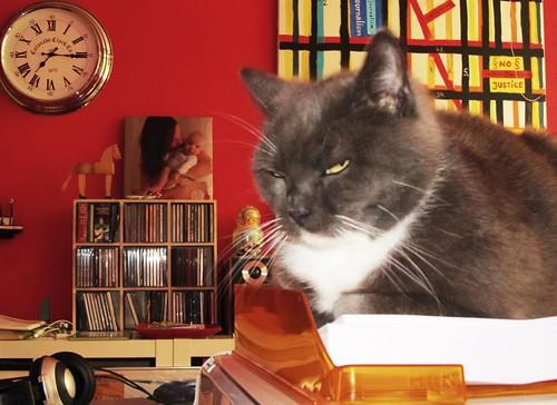 cat, observing me