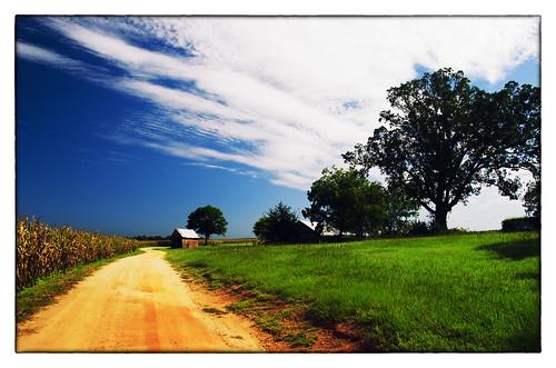 rural georgia landscape south bostwick