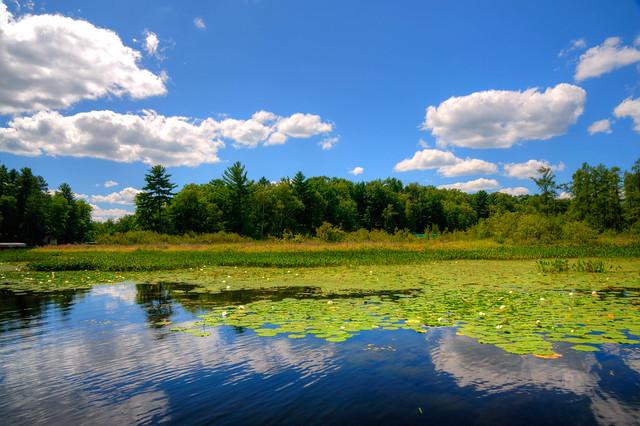 Northern Wisconsin Marsh