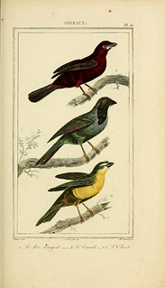 n122_w1150   by BioDivLibrary