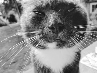 old cat | by gagilas