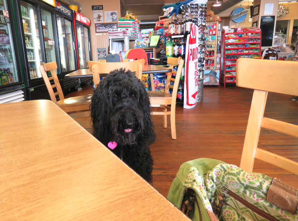 dog friendly cafe in Falmouth UK