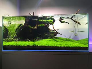 IMG_0403   by Aquazeitgeist