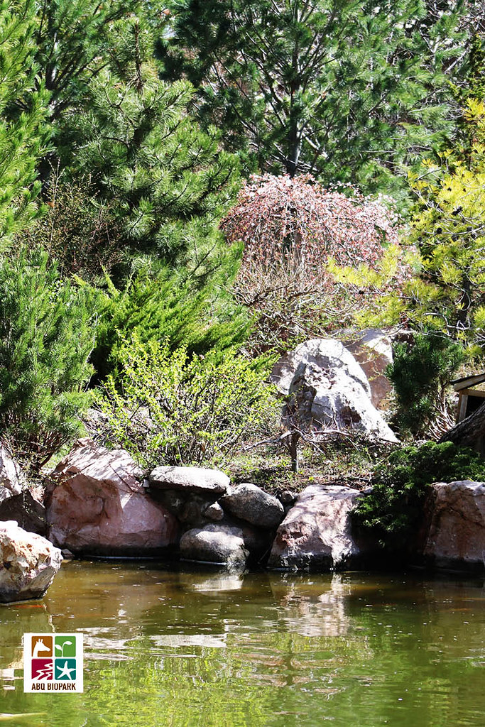 ABQ BioPark Botanic Garden Japanese Garden