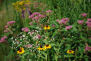 Summer Flowers in the Wildlife Habitat Garden | by Rachel Ford James