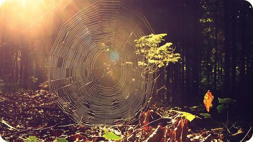 light sunset nature sunshine forest sunrise switzerland shine bokeh spiderweb spiderman