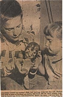 gary-sandra-scott-lion-image