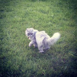 scruffy but cute cat at the horse ranch in Albruyere   by milov