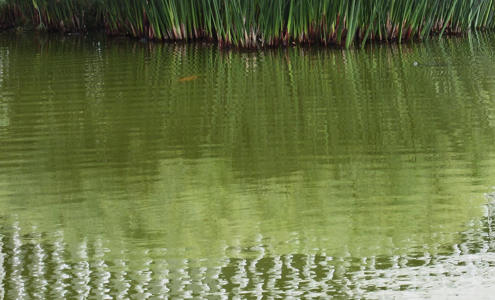 estanque 03