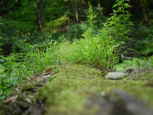 tiny fairy forest on a log in the bog | by Keithius
