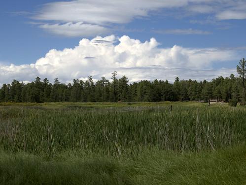 arizona nature geotagged whitemountains pinetop storms thunderstorms woodlandlake azwmonsoon woodlandlakepark pinetoplakeside billowclouds pinetoparizona kelvinhelmholtzwaveclouds kelvin–helmholtzinstability kelvinhelmholtzbillows kelvinhelmholtzclouds azwmonsoon2012 geo:lat=3412565628985775 geo:lon=1099527236736107 sheargravityclouds khiclouds