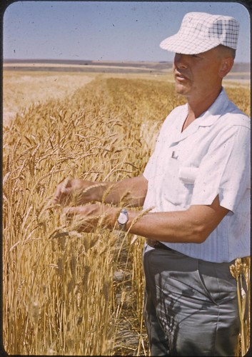 Charles Rohde in a field of wheat, circa 1975 | by OSU Special Collections & Archives : Commons