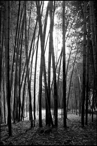 trees blackandwhite tree forest northcarolina cherokee 2012