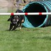 Dog Agility Trials, 2012 8 25, Wilsonville, OR