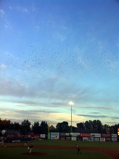 Crows over Nat Bailey Stadium