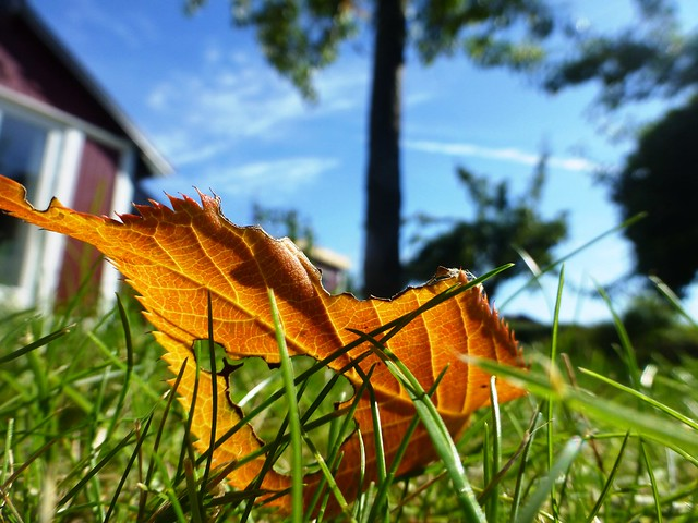 Autumn is coming.....